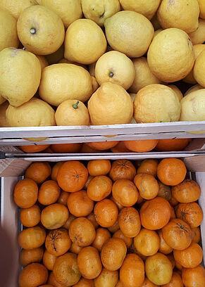 Zitronen und Mandarinen