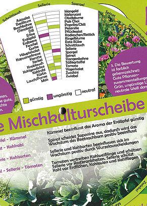 Mischkulturscheibe von WUK bio.pflanzen